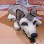 dort pes Husky